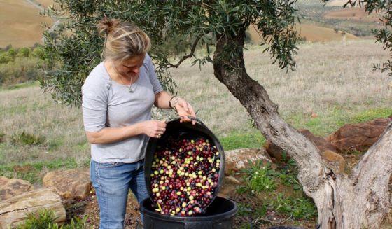 Black Mountains Smokery Suzie Fino Olive Oil