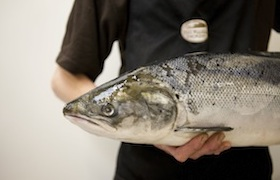 Fish used in smoked fish from Black Mountains Smokery