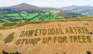 Stump up for Trees in the Brecon Beacons